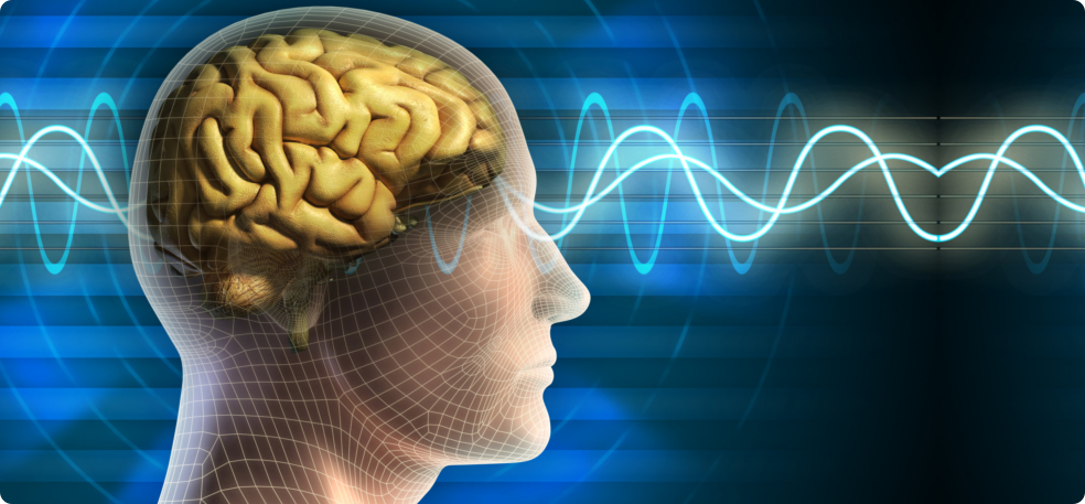 human brain and brain waves